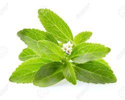 Stevia leaves on white background